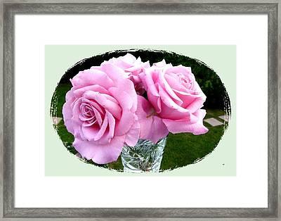 Royal Kate Roses Framed Print by Will Borden
