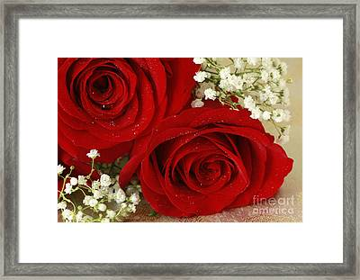 Royal Velvet Roses Framed Print by Inspired Nature Photography Fine Art Photography