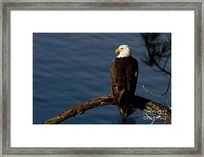 Royalty Framed Print by Beve Brown-Clark Photography