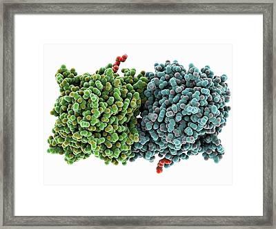 Rpe65 Retinal Pigment Protein Framed Print by Laguna Design