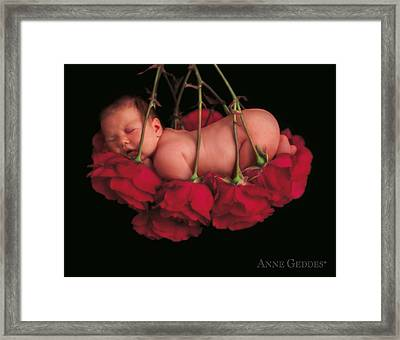 Ruby In Rose Framed Print by Anne Geddes