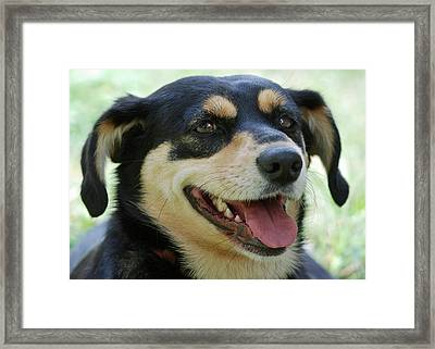 Ruby Framed Print by Lisa Phillips
