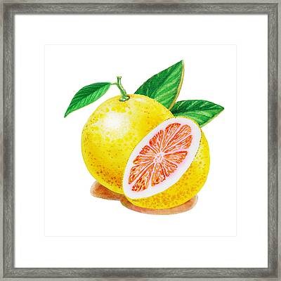 Ruby Red Grapefruit Framed Print by Irina Sztukowski