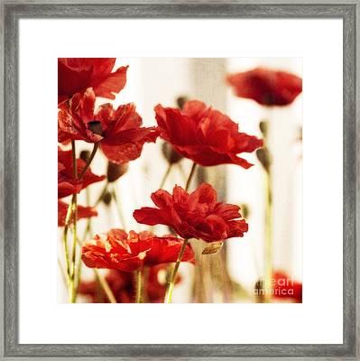 Ruby Red Poppy Flowers Framed Print by Priska Wettstein