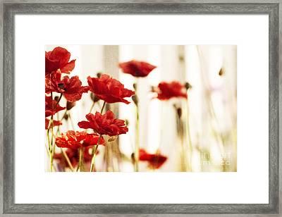 Ruby Reds Framed Print by Priska Wettstein