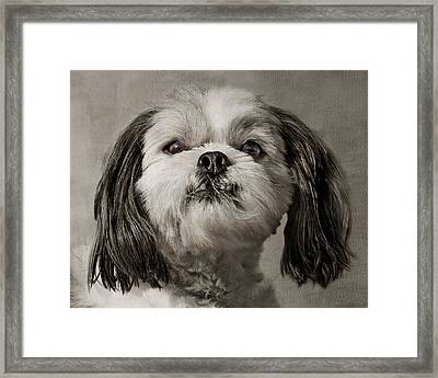 Rudy Framed Print by Nikolyn McDonald