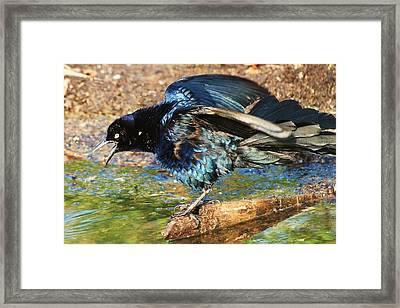 Ruffle My Feathers Framed Print by Lorri Crossno