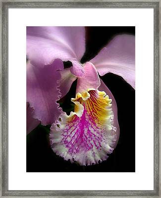 Ruffled Framed Print by Jessica Jenney