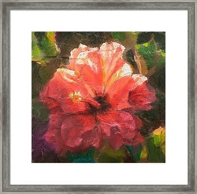 Ruffled Light Double Hibiscus Flower Framed Print by Karen Whitworth