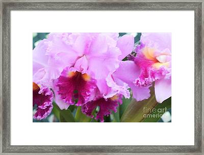 Ruffled Orchids Framed Print by Kathleen Struckle