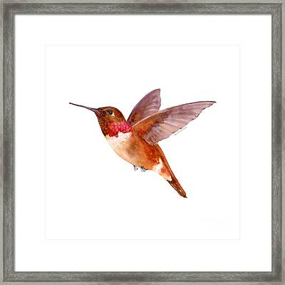 Rufous Hummingbird Framed Print by Amy Kirkpatrick