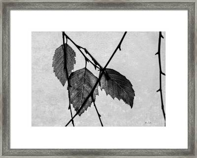 Rule Of Three Framed Print by Bob Orsillo
