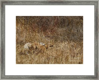Run With Me Framed Print by Judy Wood