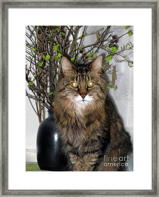 Runcius- Palm Sunday Kitty Framed Print by Ausra Paulauskaite