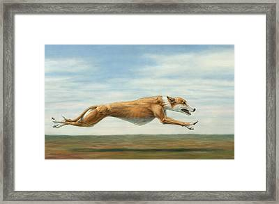 Running Free Framed Print by James W Johnson