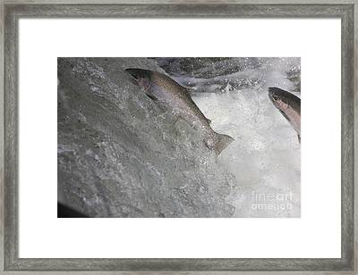 Running The Rapids Framed Print by Paul Hurtubise