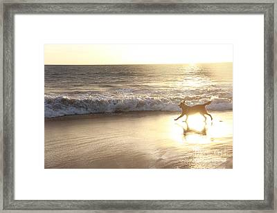 Running Through The Light Framed Print by Angelina W