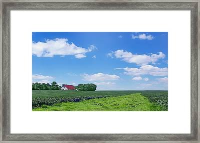 Rural Midwest - Summer Framed Print by Nikolyn McDonald