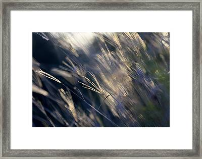 Rush Hour Framed Print by Debbie Howden