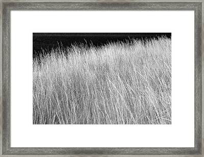 Rushes By Open Water Framed Print by Donald  Erickson
