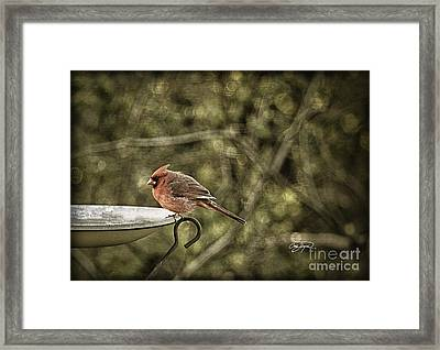 Rustic Cardinal Framed Print by Cris Hayes