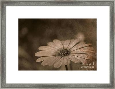 Rustic Daisy Framed Print by Clare Bevan