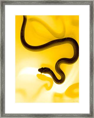 S Framed Print by Holly Kempe