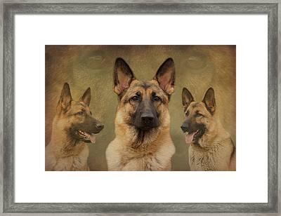 Sable German Shepherd Collage Framed Print by Sandy Keeton