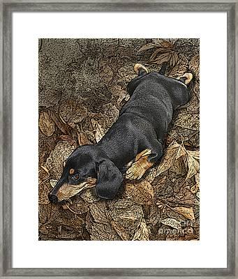 Sad Murphy Framed Print by Judy Wood