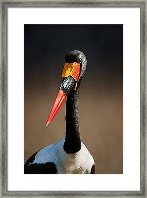 Saddle-billed Stork Portrait Framed Print by Johan Swanepoel