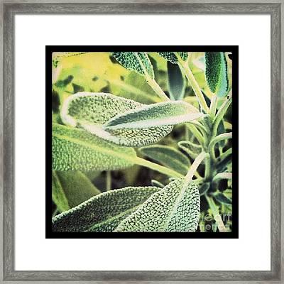Sage Framed Print by Christy Bruna