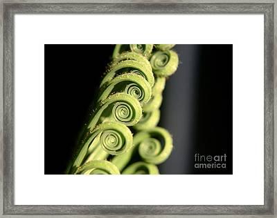 Sago Palm Leaf - 3 Framed Print by Kenny Glotfelty