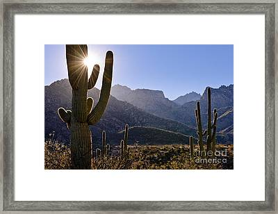 Saguaro Cacti And Catalina Mountains Framed Print by John Shaw