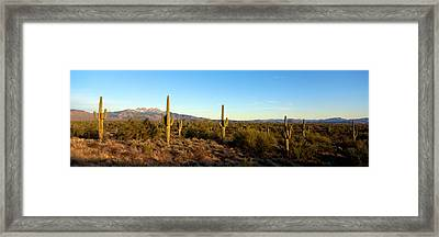 Saguaro Cacti In A Desert, Four Peaks Framed Print by Panoramic Images