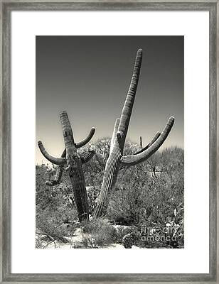 Saguaro Cactus In Duotone Framed Print by Gregory Dyer