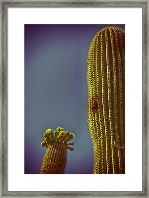 Saguaro In Bloom V2 Framed Print by Judi FitzPatrick