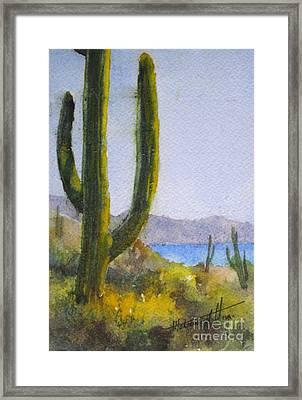 Saguaro Framed Print by Mohamed Hirji