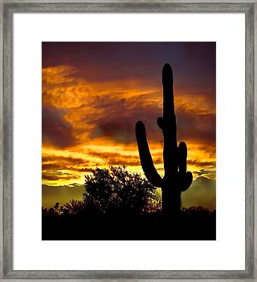 Saguaro Silhouette  Framed Print by Robert Bales