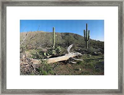 Saguaro Skeleton Saguaro National Park Az  Framed Print by Brian Lockett
