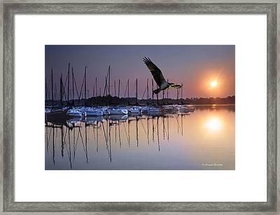 Sailboats Osprey Sunrise Framed Print by Randall Branham