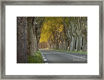 Saint Remy Trees Framed Print by Brian Jannsen