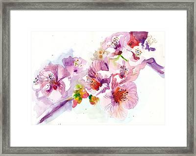 Sakura - Cherry Flowers Watercolor Framed Print by Tiberiu Soos