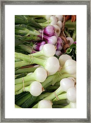 Salad Onions Framed Print by Jim West