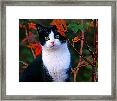 Salem Framed Print by Andy Lawless
