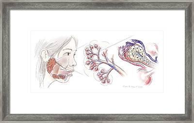 Salivary Gland Anatomy Framed Print by Nicolle R. Fuller