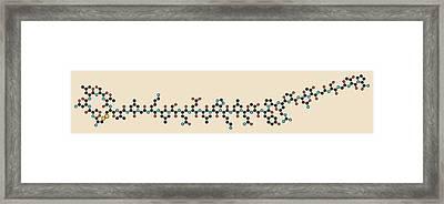 Salmon Calcitonin Peptide Molecule Framed Print by Molekuul