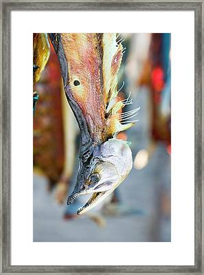 Salmon Caught By Eskimo Fishermen Framed Print by Ashley Cooper