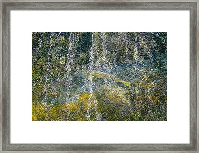 Salmon Run Beneath The Forest Reflection Framed Print by Roxy Hurtubise