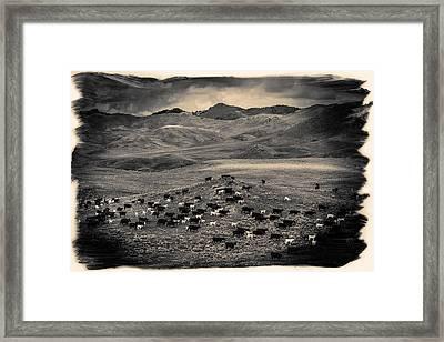 Salt And Pepper Pasture Framed Print by Todd Klassy