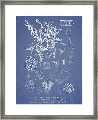 Salwater Algae Framed Print by Aged Pixel